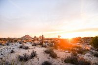 ZOOMZOOMCREATIVE_AIRSTREAM_ROUNDTRIP_JOSHUATREE-60