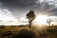 ZOOMZOOMCREATIVE_AIRSTREAM_ROUNDTRIP_JOSHUATREE-24