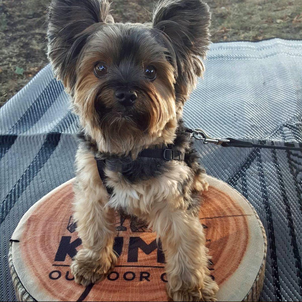 kuma wood chip pillow puppy